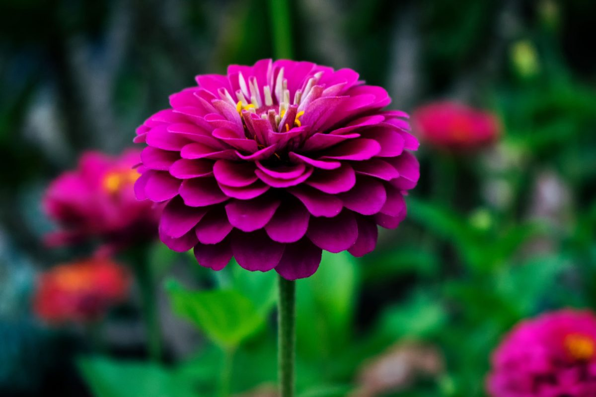 spring flowers robintide farms