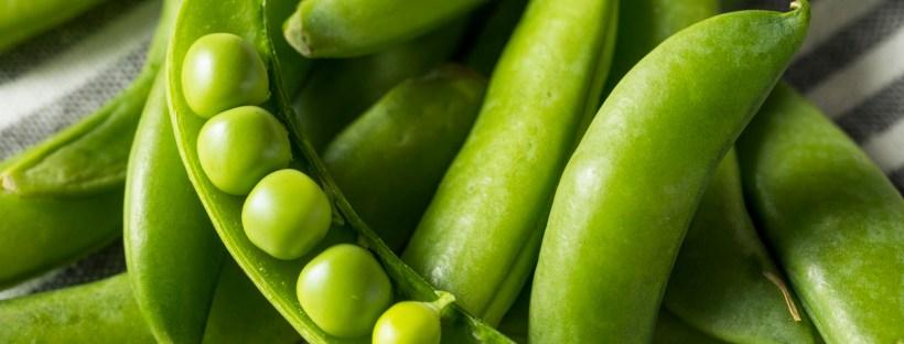 robintide farms peas