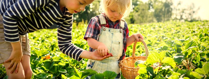 pick your own at robintide farms