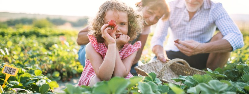 pick your own tips at robintide farms