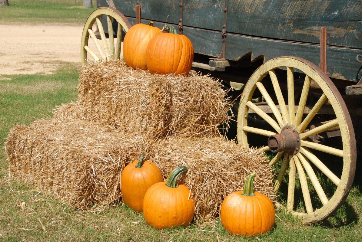 robintide farms pumpkin patch