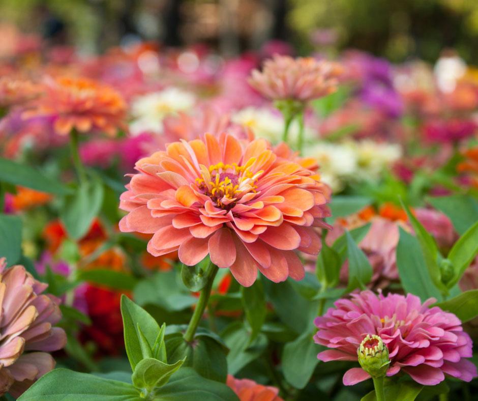 robintide farms flower picking