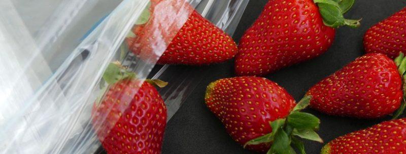strawberry storage