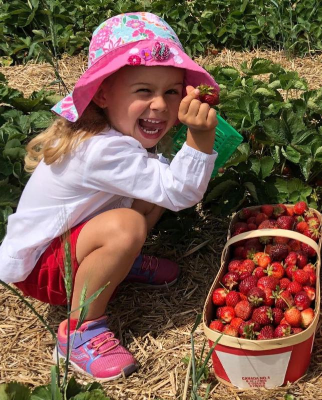 strawberries at robintide